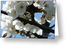 Blossoms 4 Greeting Card