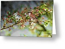Blossoms And Sparrow Greeting Card