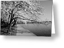 Blossoms In Bw Greeting Card