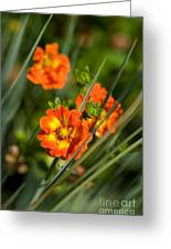 Blossoms In The Reeds Greeting Card