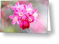 Blossoms Of Spring - April 2014 Greeting Card