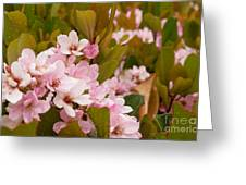 Blossoms Of The Rain 2 Greeting Card