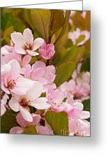 Blossoms Of The Rain Greeting Card