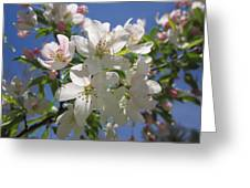 Blossoms On Blue Greeting Card