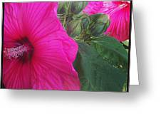 Blosssoms And Buds Hibiscus  Greeting Card