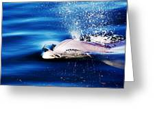Blow Hole  Greeting Card