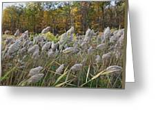 Blowing In The Wind Greeting Card