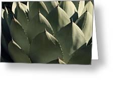 Blue Aloe Greeting Card by Ellen Henneke
