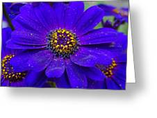 Blue And Bright Greeting Card
