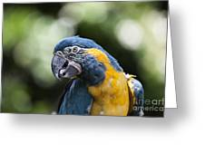 Blue And Gold Macaw V5 Greeting Card