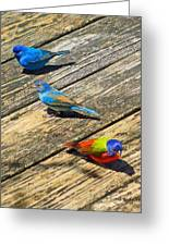 Blue And Indigo Buntings - Three Little Buntings Greeting Card
