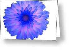 Blue And Pink Dahlia Greeting Card