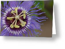 Blue And Purple Detail Greeting Card