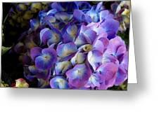 Blue And Purple Hydrangeas Greeting Card