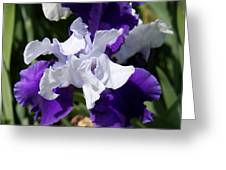 Blue And White Iris Greeting Card