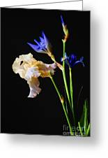 Blue And White Iris' Greeting Card