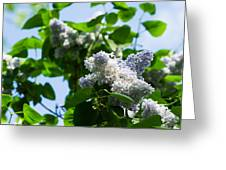 Blue And White Lilacs Greeting Card