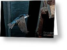 Blue And White Swallow Greeting Card