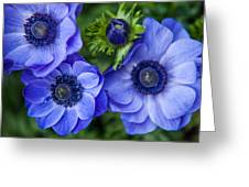 Blue Anemones. Flowers Of Holland Greeting Card