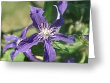Blue Angel Clematis Close   # Greeting Card