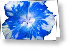 Blue Appaloosa Greeting Card