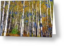 Blue Aspen On Grand Mesa Greeting Card