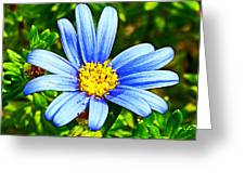 Blue Aster In Park Sierra Near Coarsegold-california   Greeting Card
