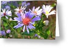 Blue Asters 3 Greeting Card