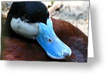 Blue Beak Greeting Card