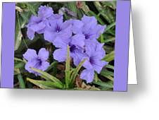Blue Beauties Open To The Sun Greeting Card