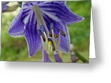 Blue Bell Flower Greeting Card