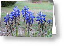 Blue Bells 1 Greeting Card