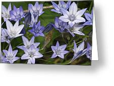Blue Bells Greeting Card