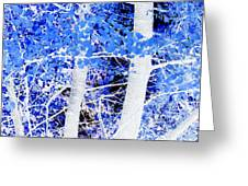 Blue Birch Trees Greeting Card