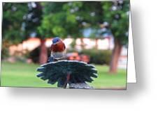 Blue Bird - I'm Looking At You Kid Greeting Card