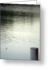 Blue Bird Over The Water...   # Greeting Card