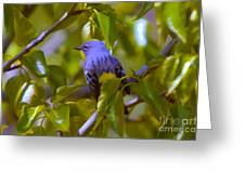 Blue Bird With A Yellow Throat Greeting Card