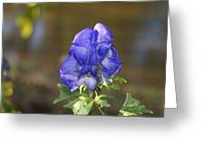 Blue Bliss   # Greeting Card