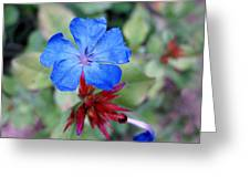 Blue Bloom Greeting Card