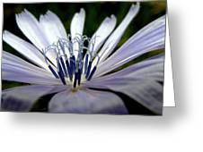 Blue Blossoms  3 Greeting Card