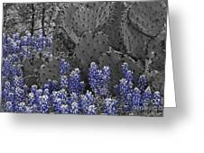 Blue Bonnet Cactus Greeting Card