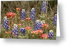 Blue Bonnet Carpet V10 Greeting Card