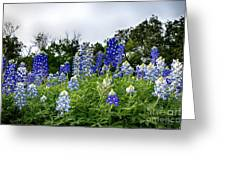 Blue Bonnet Carpet V9 Greeting Card