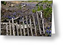 Blue Bonnet Fence  Greeting Card