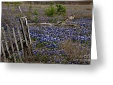 Blue Bonnet Fence V2 Greeting Card