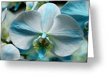 Blue Bow Orchid Greeting Card