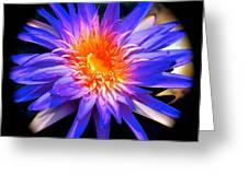 Blue Burst Lily Greeting Card