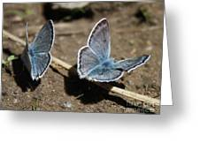 Blue Butterflies Greeting Card