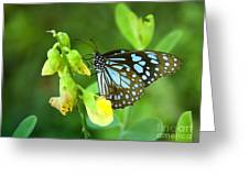 Blue Butterfly In The Green Garden Greeting Card
