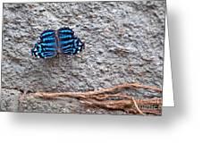 Blue Butterfly Myscelia Ethusa Art Prints Greeting Card